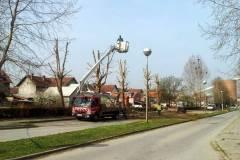 orezivanje drveca na secerani ZUPANJA 2.4. 2014